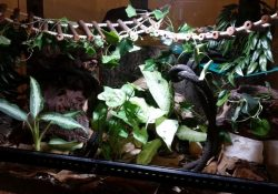 crested gecko terrarium ideas - katie wilkins