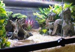 hognose snake terrarium ideas - lauren blaha