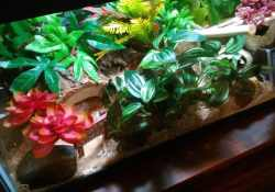 corn snake terrarium ideas - luanne davis