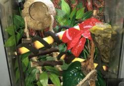 crested gecko terrarium ideas - rebecca nolan2