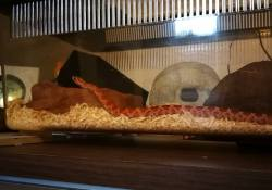 corn snake terrarium ideas - tim harris2