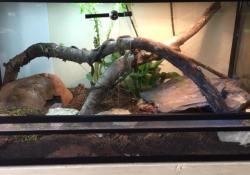 Ball python terrarium ideas - Tim Warner