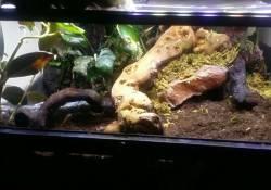 Ball python terrarium ideas - Tobias McCrite
