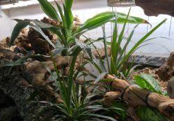 Ball python terrarium ideas - Zack Tippie