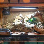 Boa Constrictor Terrarium Ideas