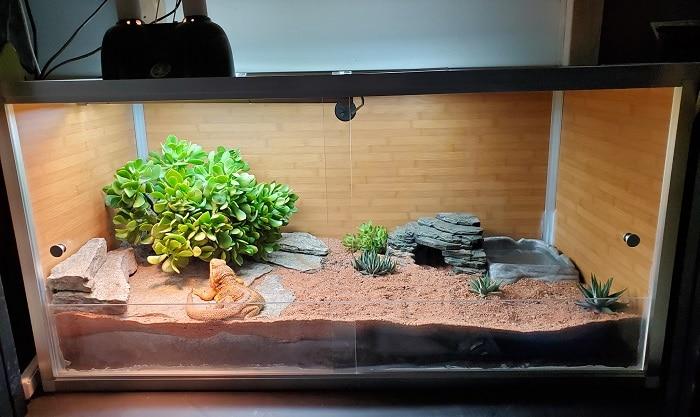Zen Habitats 4x2x2x Reptile Enclosure