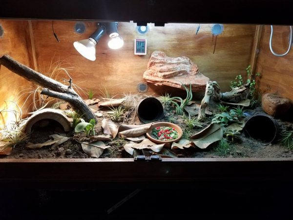 Contributed by Bearded Dragons Network