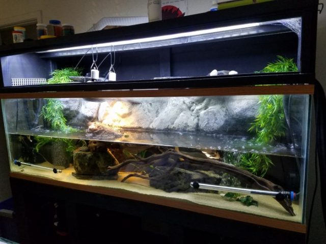 red eared slider turtle tank decor ideas