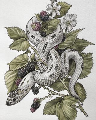 hognose snake art - V Steiner Art