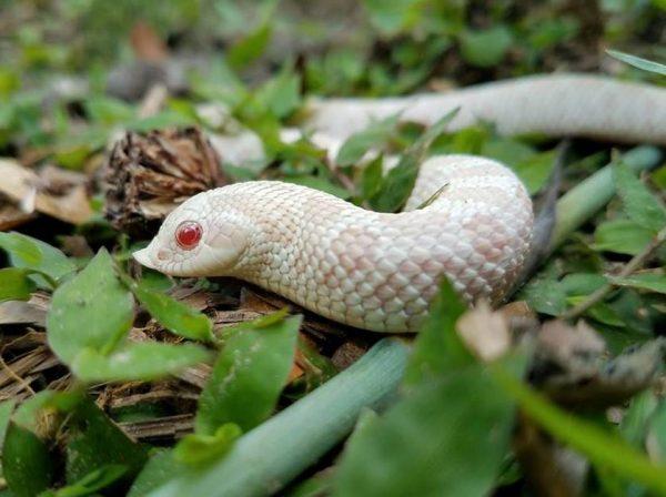 How to Decorate a Hognose Snake Enclosure