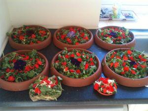 Petunia & Geranium Petals