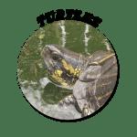 Turtle-Circle