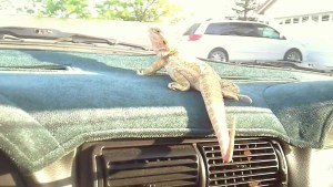Dragon on dash
