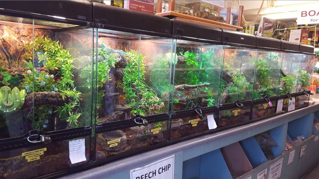 Lincoln Reptile & Pet Centre