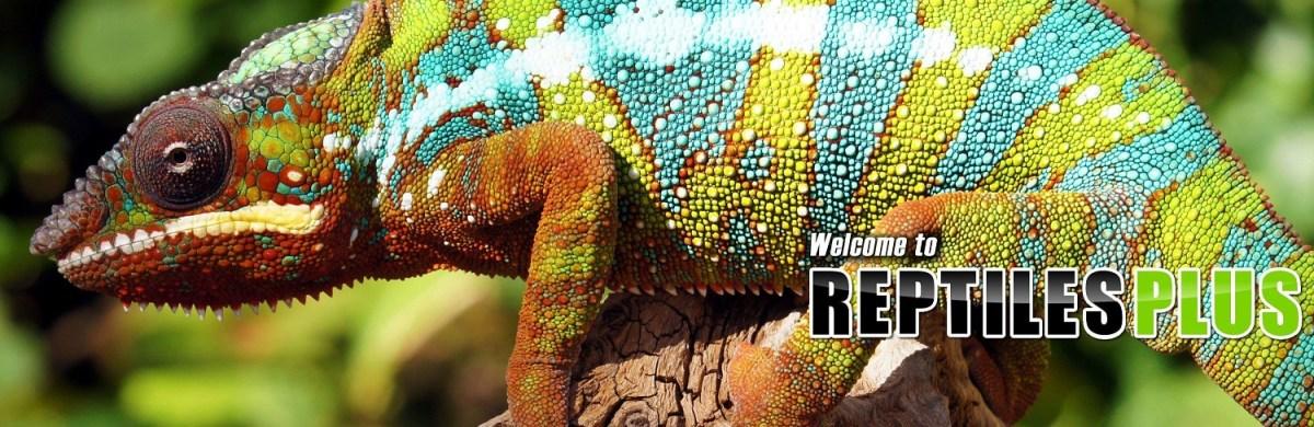 Reptile Plus Poole
