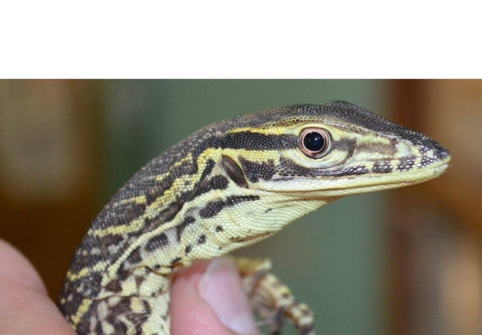 BJF reptiles and Pets Ltd