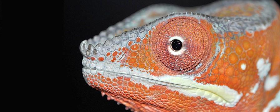 Emsworth Aquaria & Reptiles