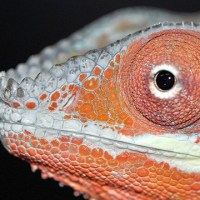 Emsworth Aquaria & Reptiles
