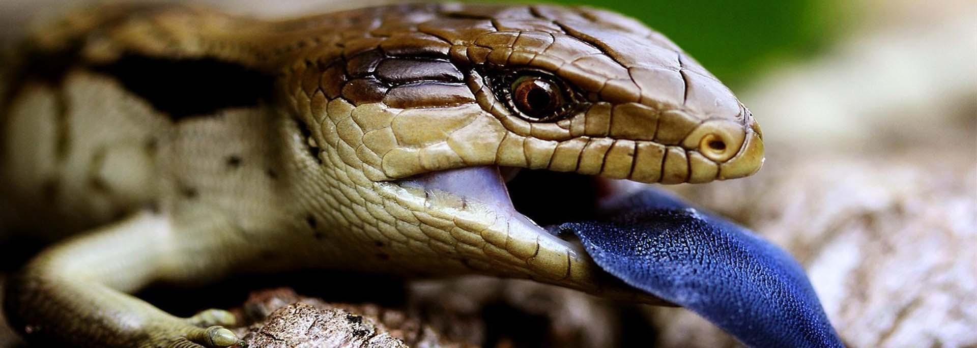 slider-reptiles-online-3