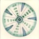 Diatom 1