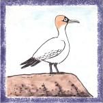 Seabird 17