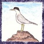 Seabird 8