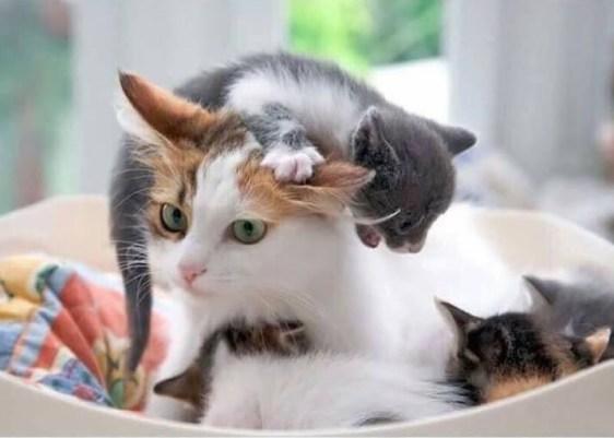 gatos-perros-maternidad-gatuna-perruna-fotos