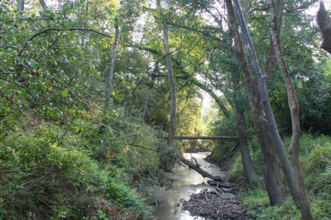 Buckners Creek - Fayette County Ranch for Sale - Republic Ranches