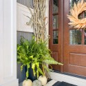 Outdoor fall decorating on a front porch with ferns, corn stocks, pumpkins