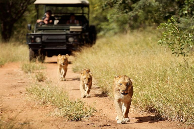 your best African safari trips