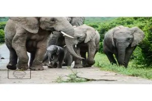 Family of elephants card linking to Etsy to buy