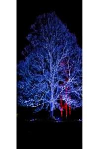 An illuminated tree linking to Etsy store