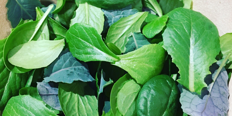 How to Grow Fresh Salad Greens Indoors