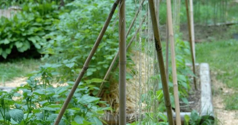 Building Trellises: The Garden Grows Up