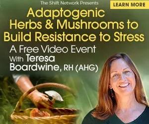 Adaptogenic Herbs & Mushrooms