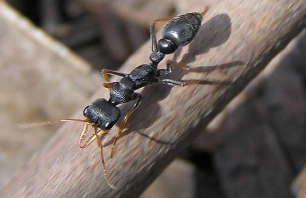 Image Via Wikipedia Commons Jeffdelonge