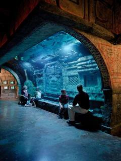 Downtown Aquarium Shark Weekend | Framesite.blog