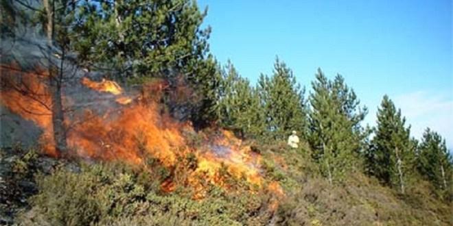 Ήπειρος: Συσκέψεις σε Ήπειρο & Δυτική Μακεδονία για την αντιμετώπιση των κινδύνων από δασικές πυρκαγιές