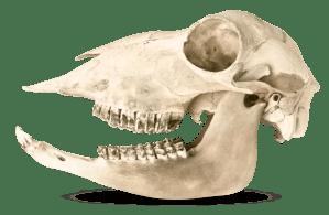 Animal Teeth | Types Of Teeth | DK Find Out