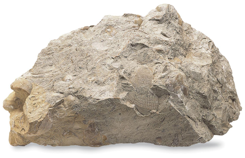 Sedimentary Rock Layered