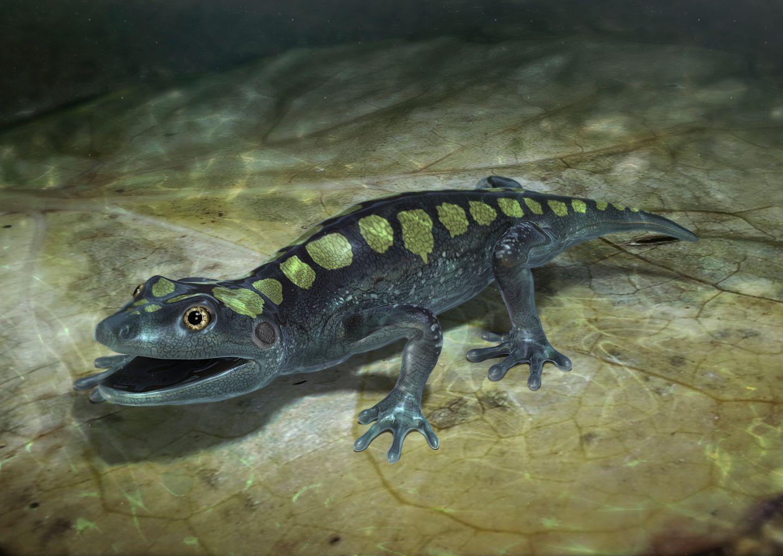 Prehistoric Salamander