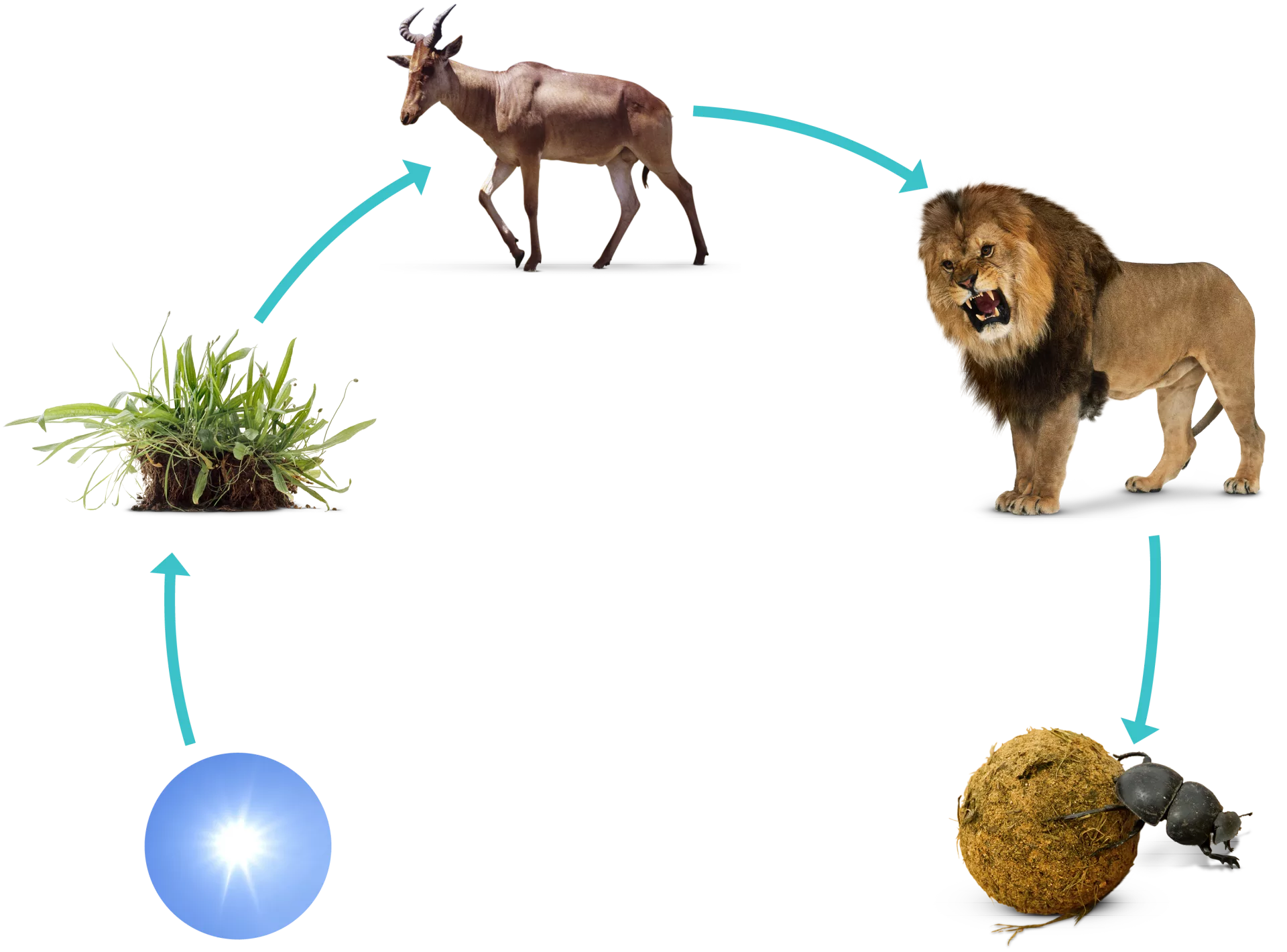 What Is A Food Chain