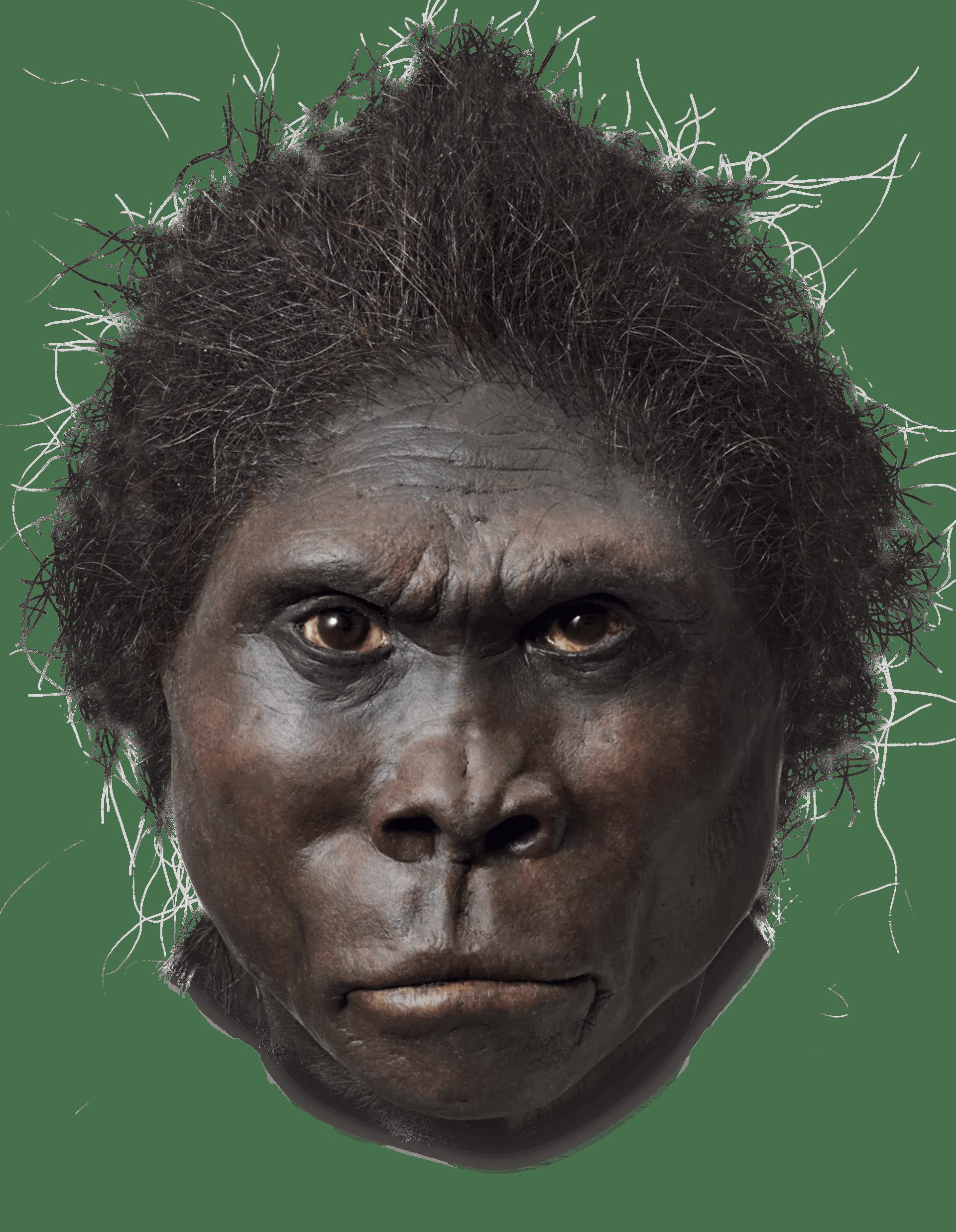 Paleolithic And Neolithic Worksheet