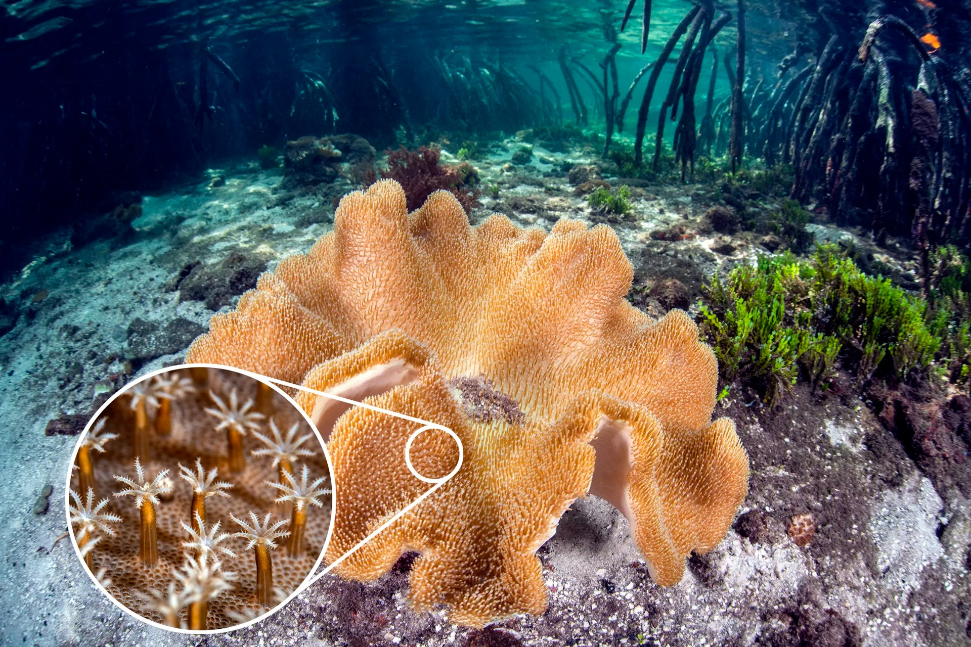 Coral Reef Facts For Kids