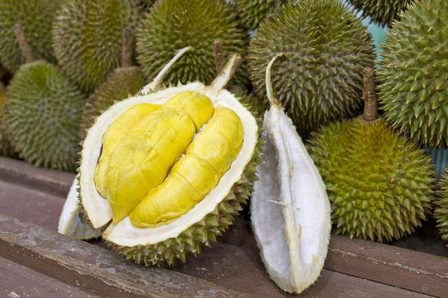 ผลการค้นหารูปภาพสำหรับ manfaat buah durian bagi kesehatan