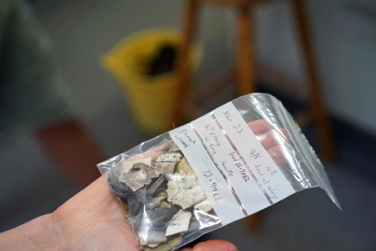 Pieces of plastic from dead bird's stomach