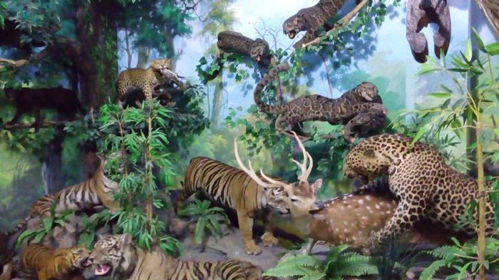 Rahmat International Wildlife Museum dan Gallery