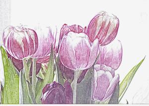 tulips_art_gndajn