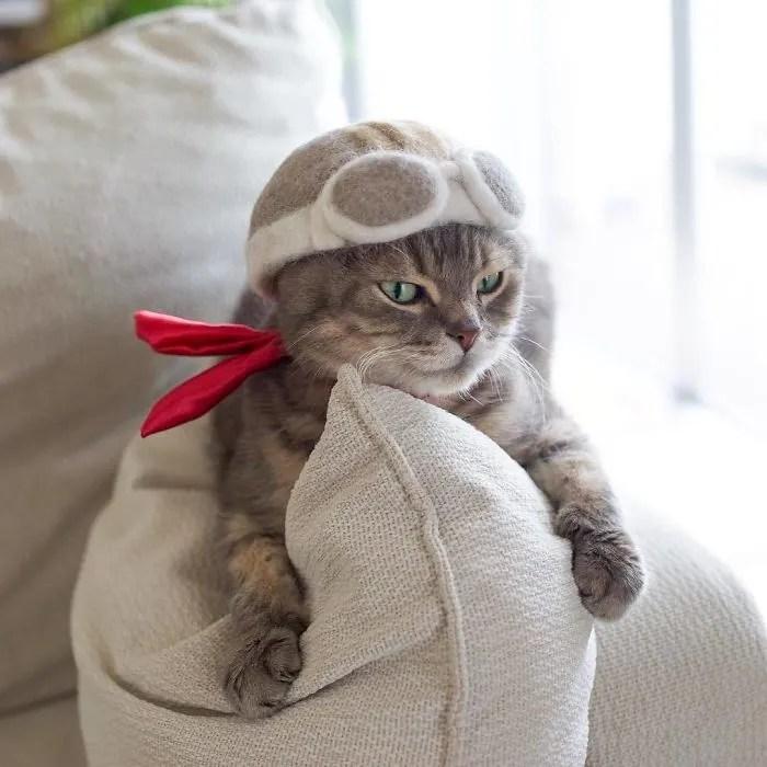 hipwee BntOb6WleF9 png  700 1 Kucing kucing Lucu dengan Topi dari Rontokan Bulu bulunya