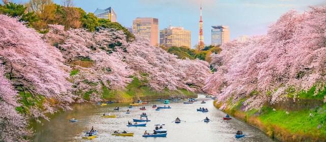Tokio - Japan Individualreisen   Enchanting Travels